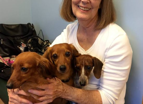 Puppy Mill Dachshunds' Happy Ending