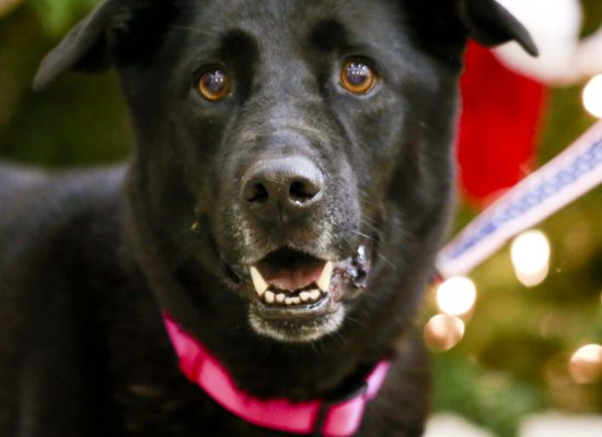 Senior Dog In Kidney Failure Seeks Adopter Who Can Live In The Moment