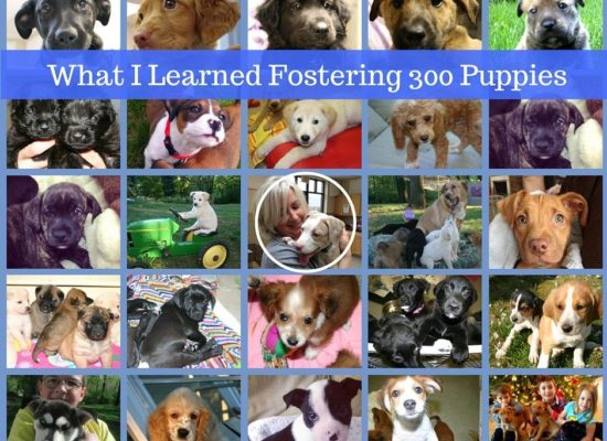 What I Learned Fostering 300 Puppies