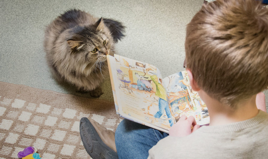 Young boy reads to a shelter cat