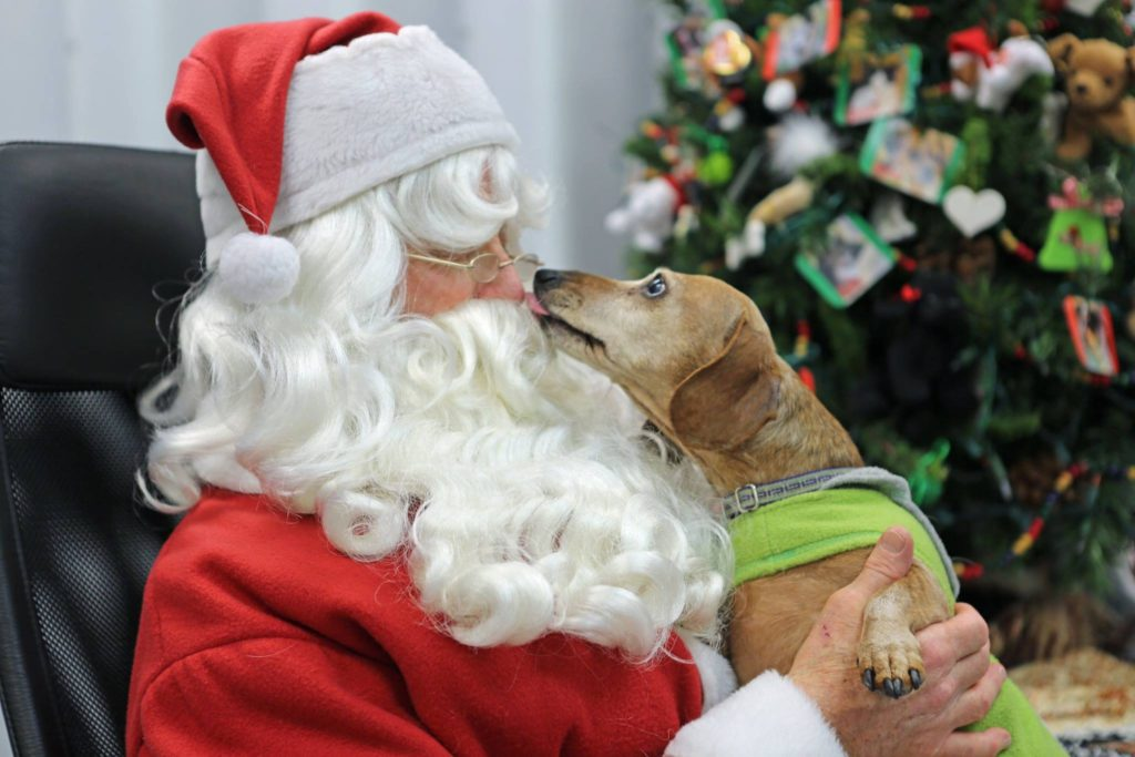 Santa taking photos with rescue dogs at SICSA.