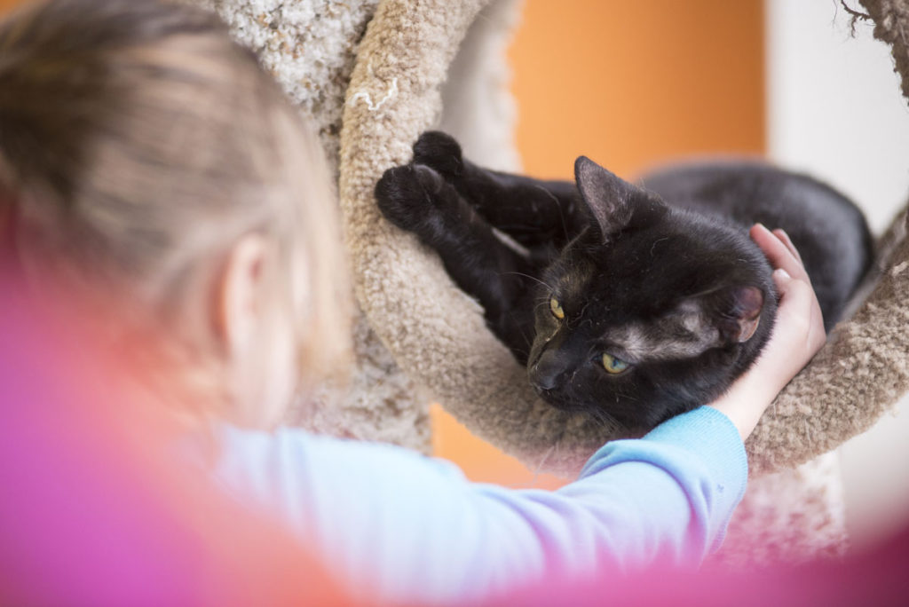 A little girl pets a shelter cat looking for a home.