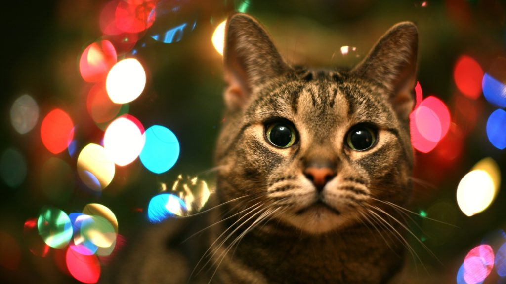 A cat surrounded by Christmas lights.
